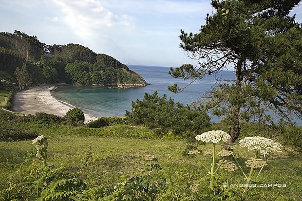 Playa de Fornos (Cariño, A Coruña)