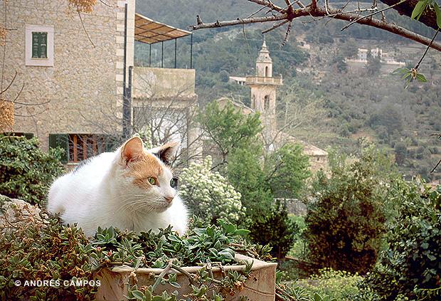 Gato en Valldemossa (Mallorca)